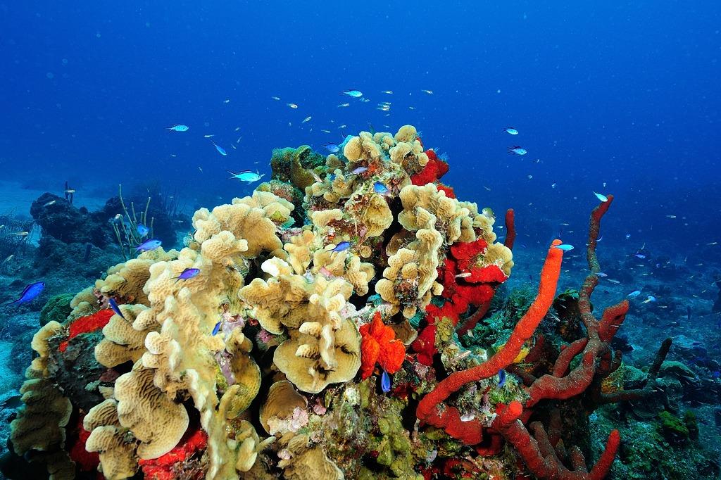 Préservons les beautés sous marines