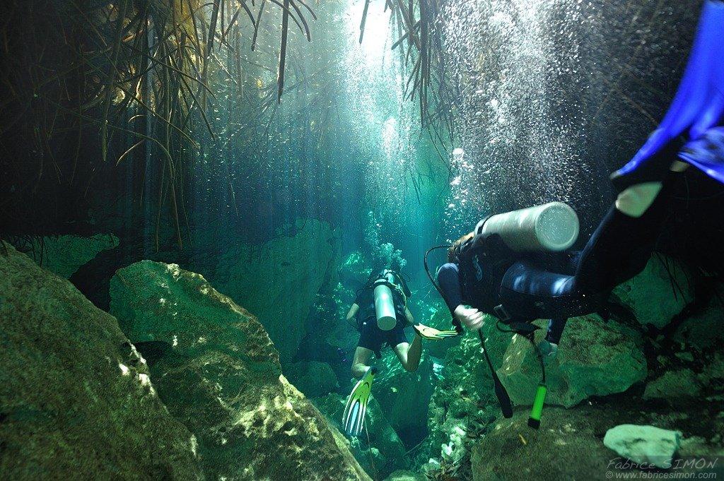 Plongée en Cenotes, sous la mangrove