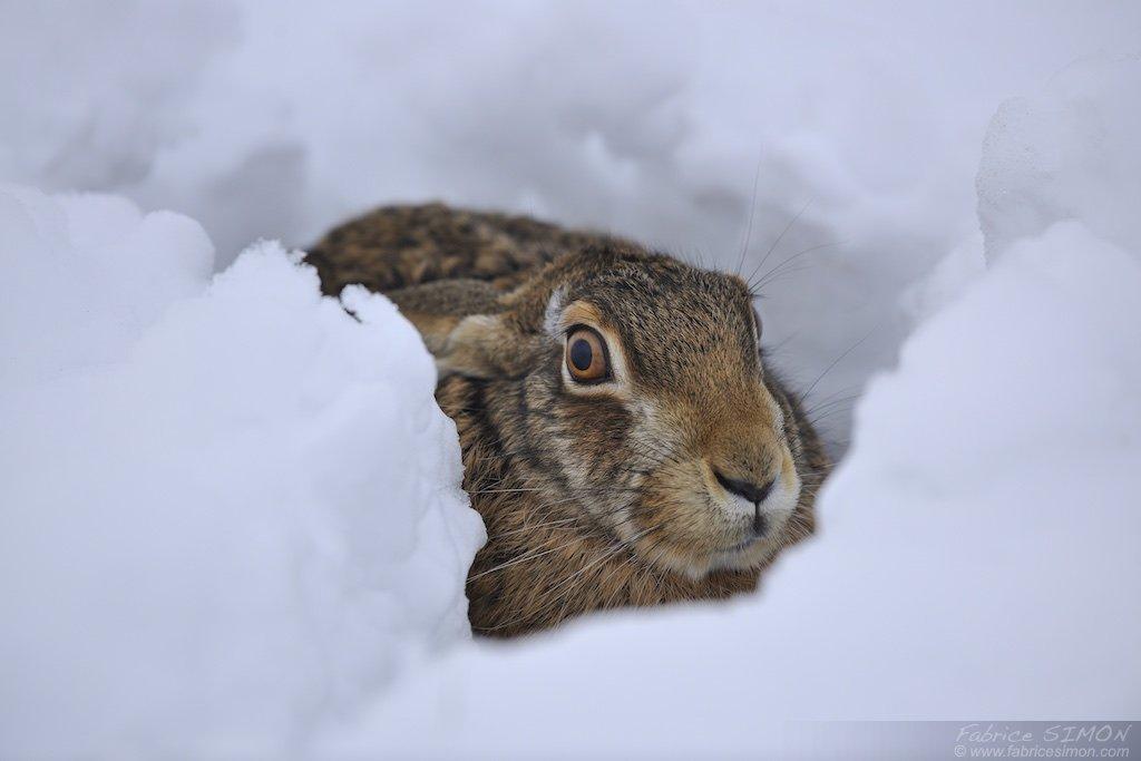 Au gite dans la neige
