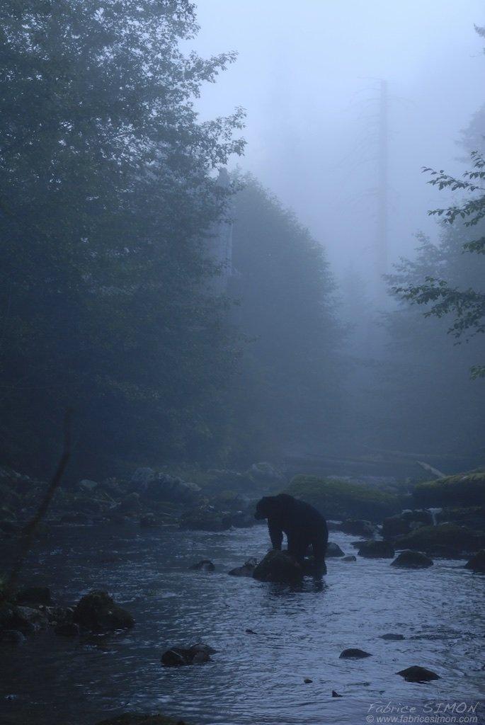 Dans la brume de la forêt pluvieuse