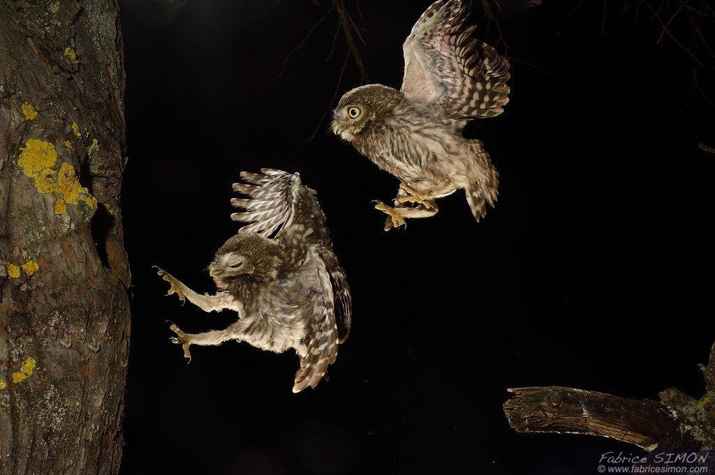 Jeunes à l'atterrissage
