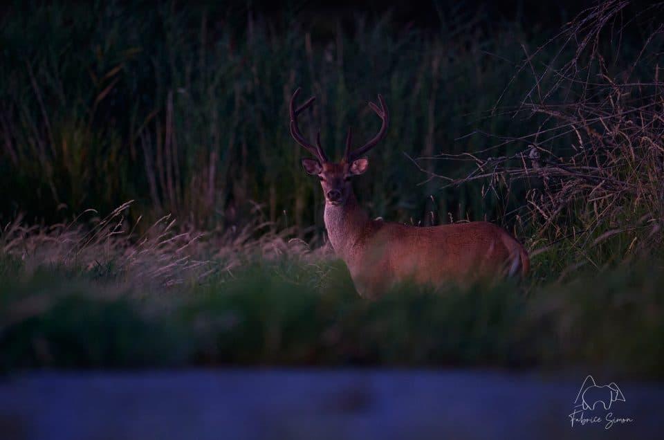 Nikon D6, l'Amiral en photographie animalière